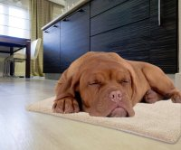 Self-Heating Snuggle Pet Rug