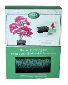 Grow Your Own Bonsai Sweet Gum Tree