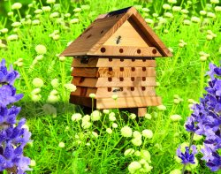 Solitary Bee Hive