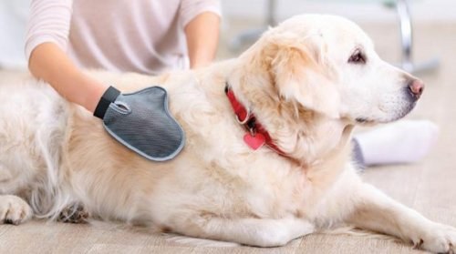 Pet Massage and Grooming Mitt